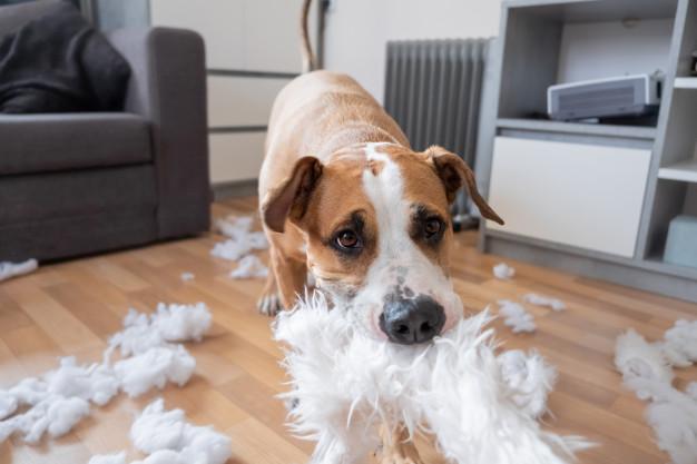 Dog Destructive Chewing