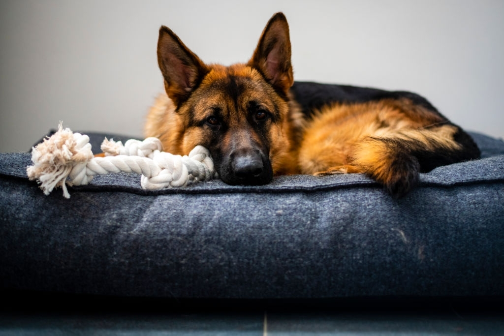 fluffy bed for dogs