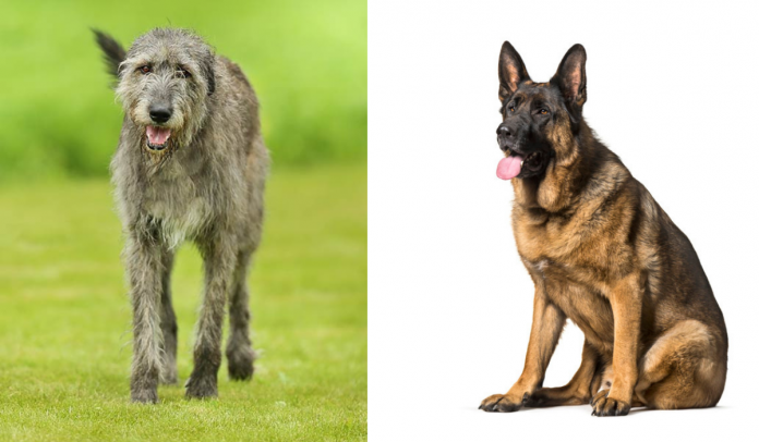 GSDS and wolfs