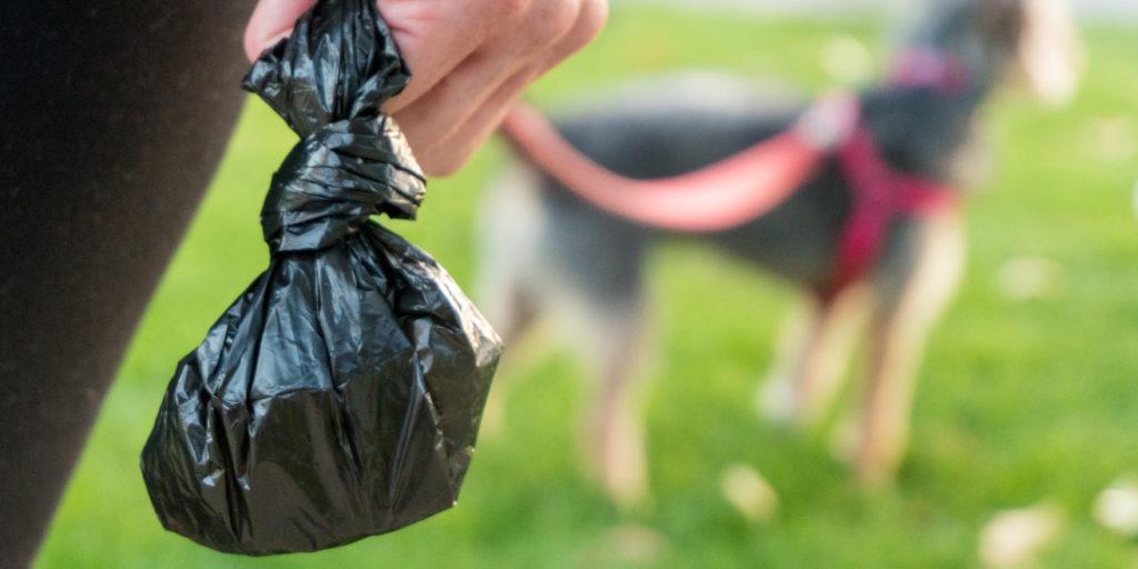 plastic bag for dog poop