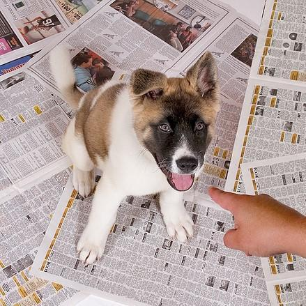 Newspaper for Dog In-home training
