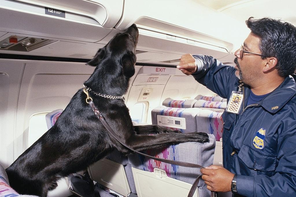sniffer dog training