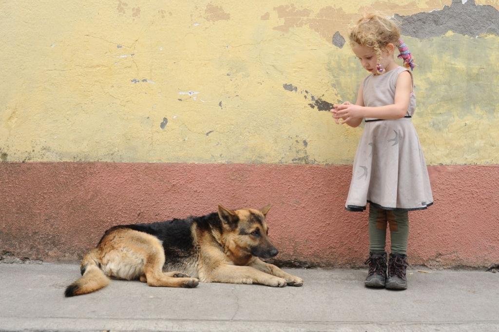 Rescuing German Shepherd