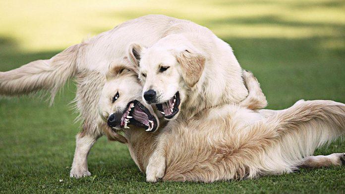dog bite another dog