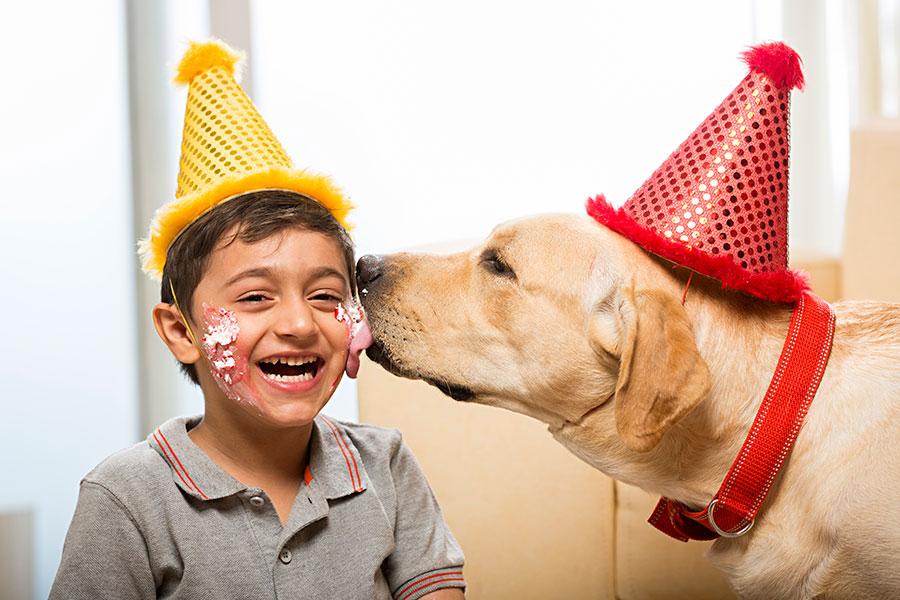 Dog Licking Ears