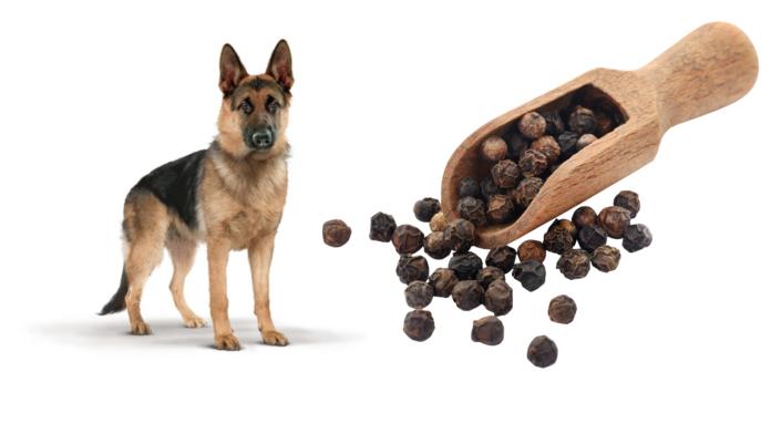 can dog eat black pepper
