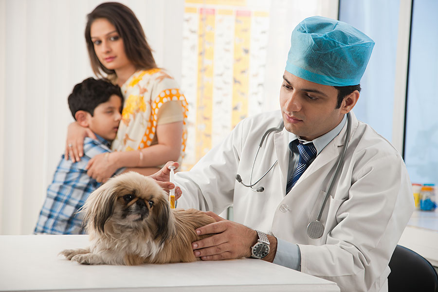 Antibiotic Treatment for Dogs