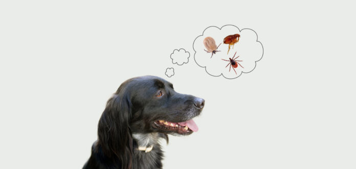Paralysis Tick in Dogs