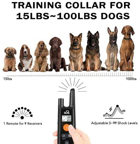 Dog Care Rechargeable Shock Collar