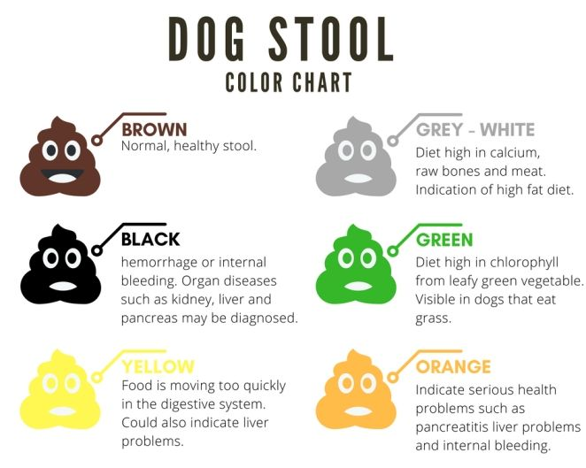 Yellow Dog Poop