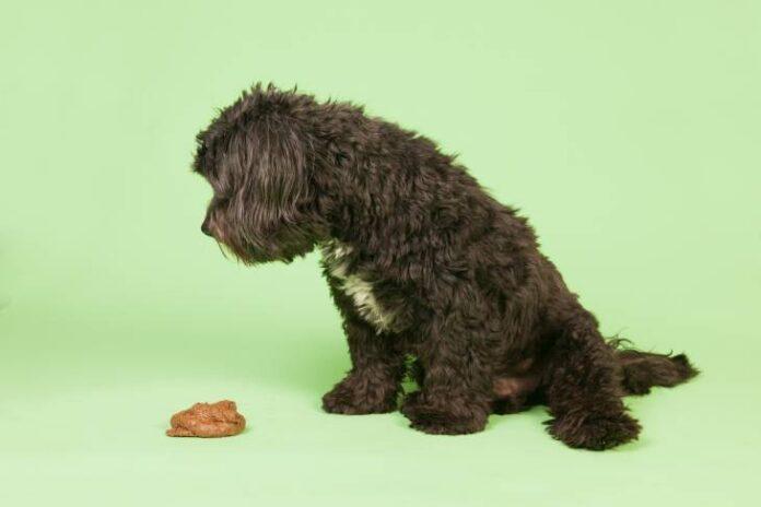 Dog Poop So Much