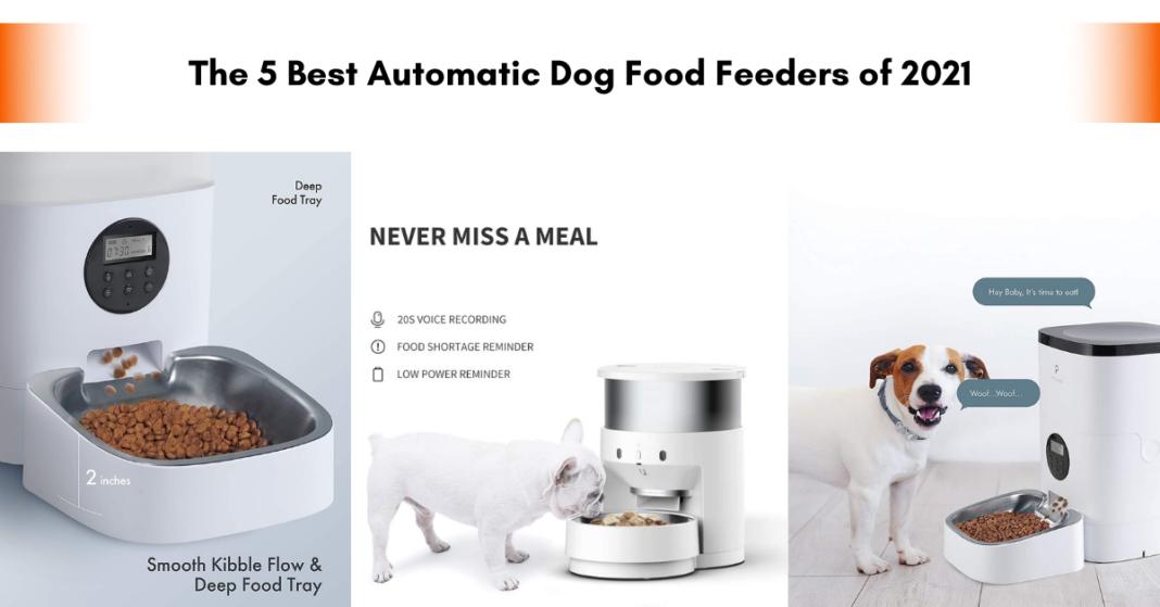 Automatic Dog Food Feeders