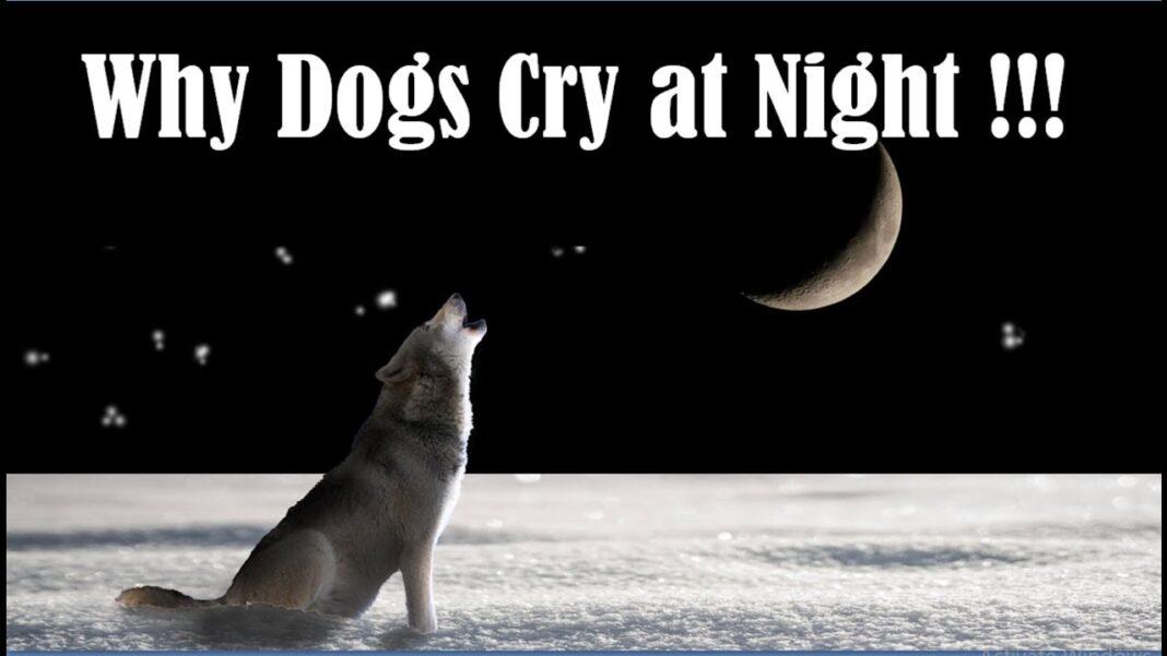 dog crying at night