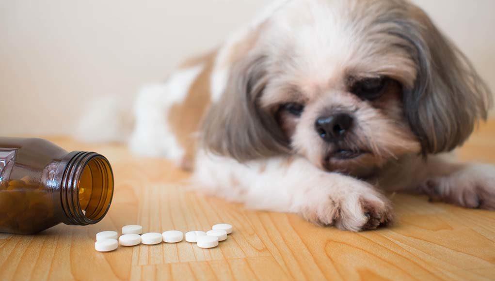 Gabapentin for Dogs