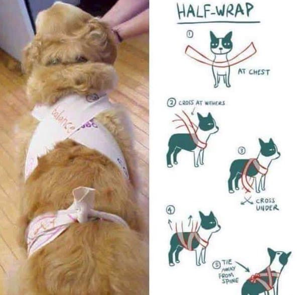DIY Anxiety Wrap for Dogs