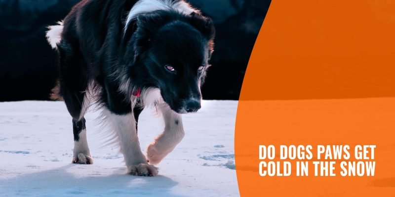 Dog's Paws Are Cold