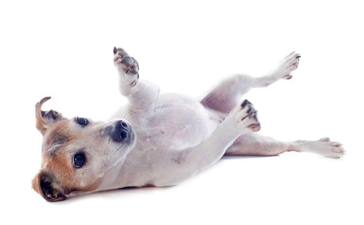 dog scratch reflex