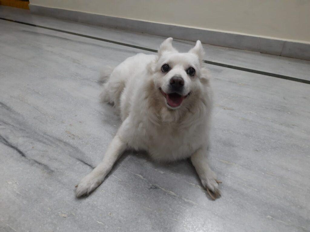 Pomeranian dog photo