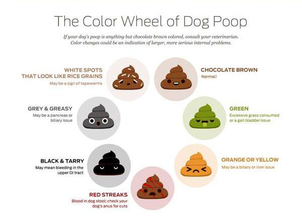 Blood in Dog Poop