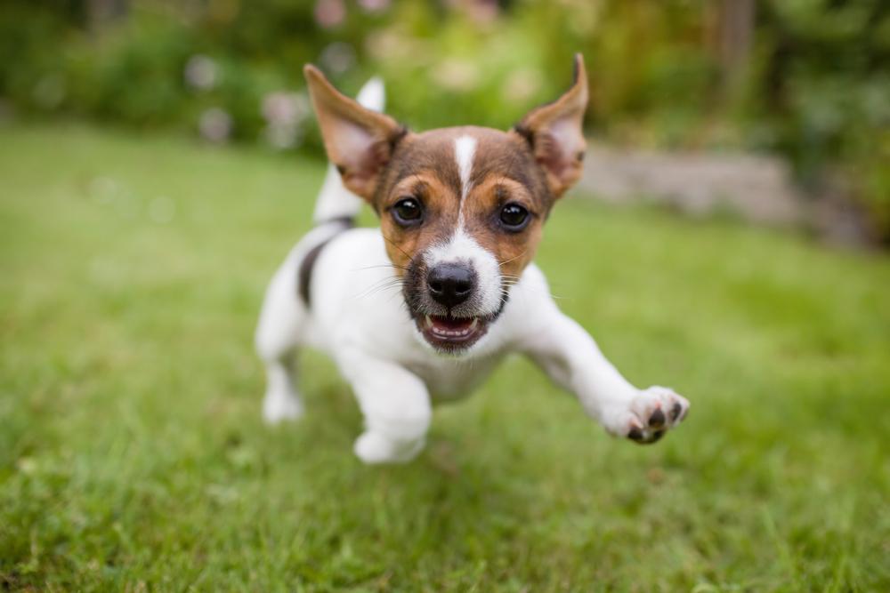 Quarantine Puppy