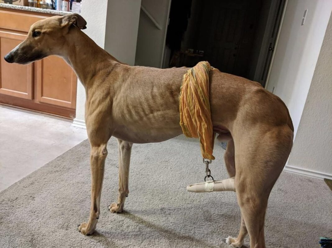 Happy Tail Syndrome