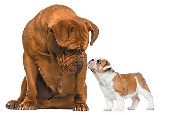 Introducing a New Dog to Your Existing Dogs