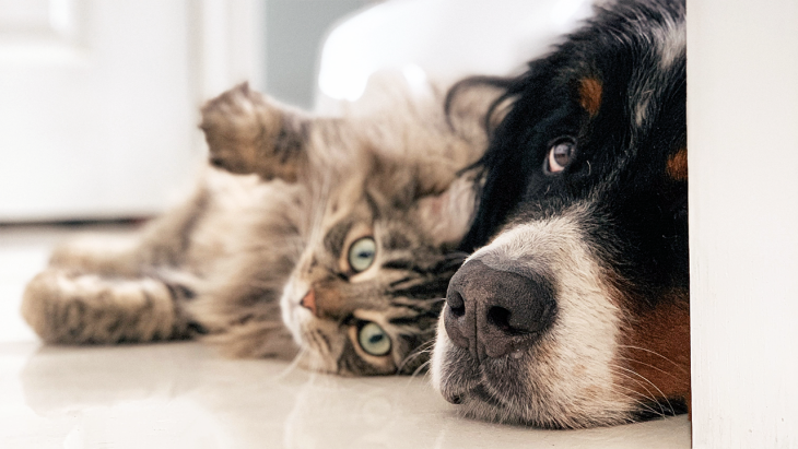 Introducing a New Dog to an Old Cat