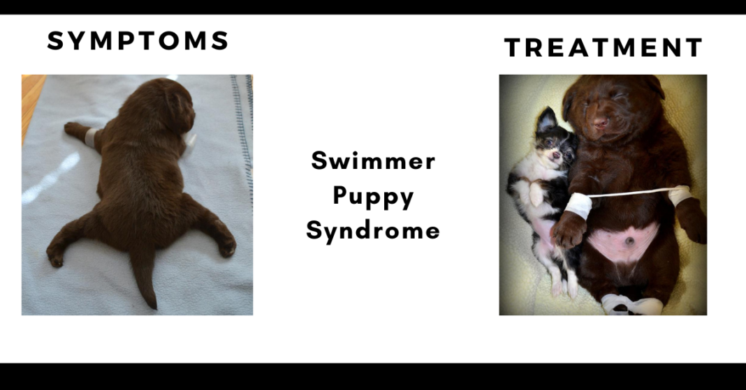 Swimmer Puppy Syndrome
