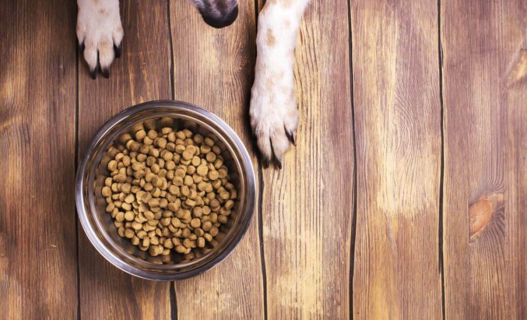 Dog Food Expire