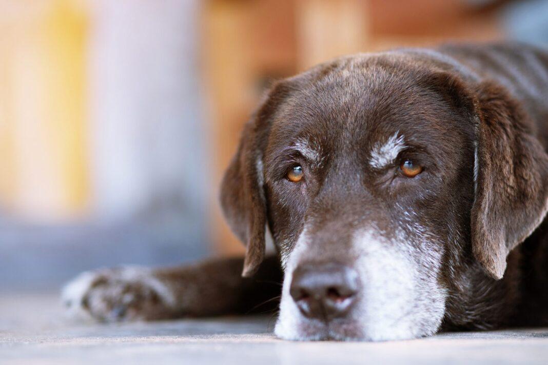 senior Dog Diarrhea