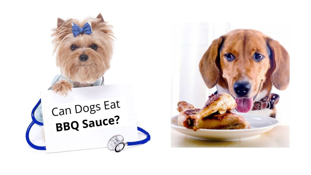 Dogs Eat Barbecue Sauce